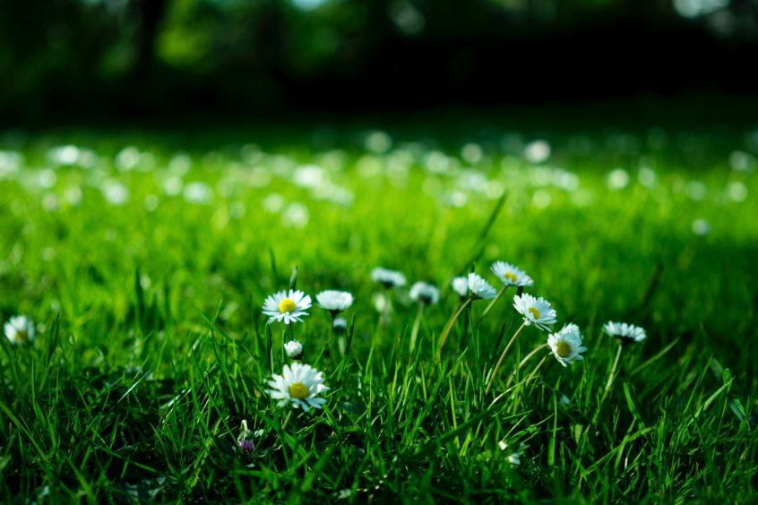 Spring into Lawn Care