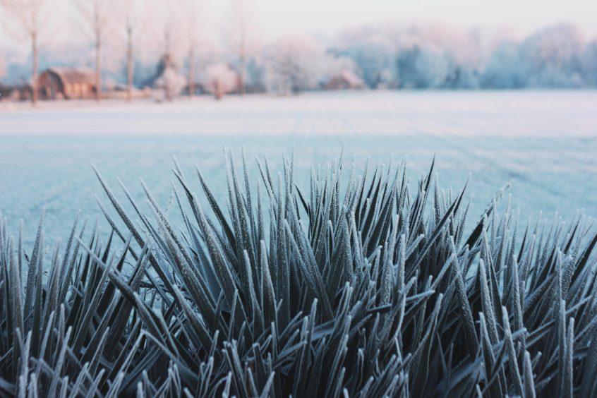 Frozen Landscaping